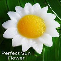 Jumbo Sun Flower