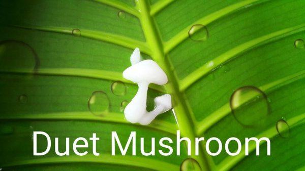 Duet Mushroom